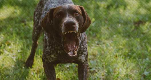 Dog Bites and Attack Attorney in New York Porter Nordby Howe